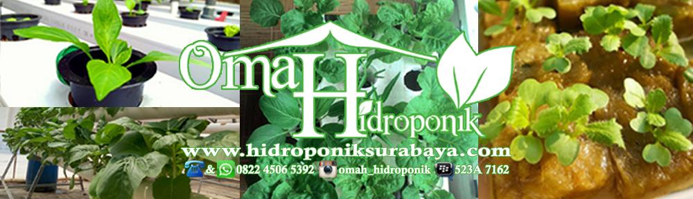 Nutrisi Hidroponik – Net Pot – Bibit Tanaman – Rockwool Hidroponik